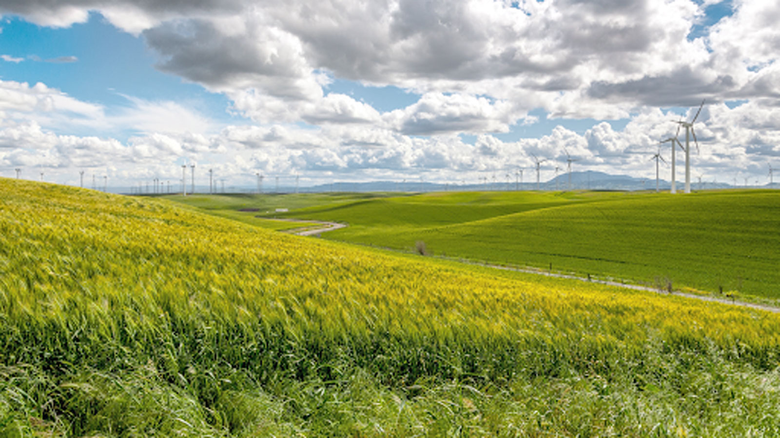 """<h4>CLEAN ENERGY</h4><h5>We're calling for the expansion and extension of clean energy tax credits.</h5><div><a style=""""padding: 8px 15px 10px 10px; font-family: 'open_sansbold' !important; color: #fff; border: none; border-radius: 5px; background-color: #FF0000;"""" href=""""https://environmentamerica.webaction.org/p/dia/action4/common/public/?action_KEY=42202"""">TAKE ACTION</a></div><em>WestBoundary Photography Chris Gill</em>"""